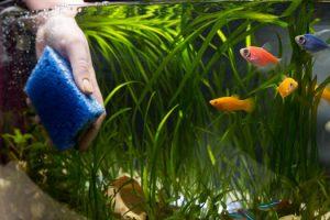 Schedule for Maintaining Aquariums San Diego, CA