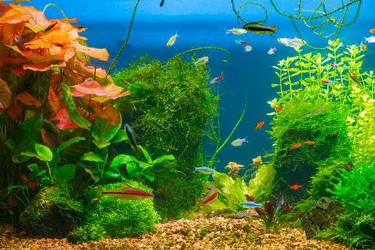 Adding Plants to Fish Aquariums San Diego, CA
