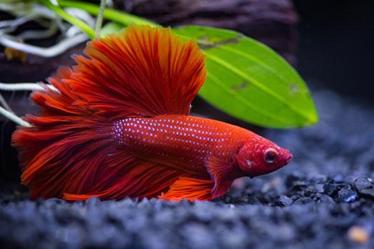 Exercise for Aquarium Fish San Diego, CA