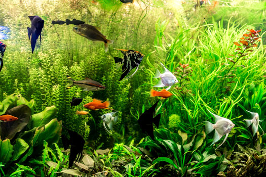 Tips for Beginners to Tropical Fish Aquariums San Diego, CA