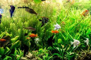 Fertilizing Planted Aquariums San Diego, CA