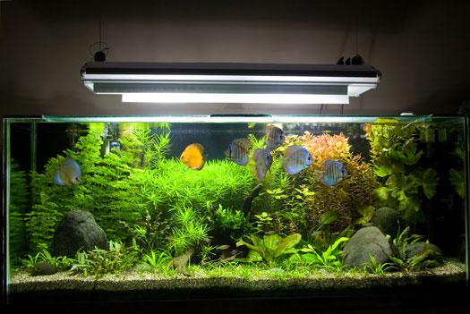 Ideal Lighting for Planted Fish Aquariums San Diego, CA