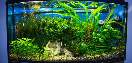 Ideal Soil Options for Freshwater Planted Aquariums San Diego, CA