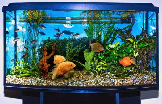 Ideal Shape & Size for Fish Aquariums San Diego, CA