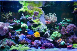 Beginners & Saltwater Aquariums San Diego, CA