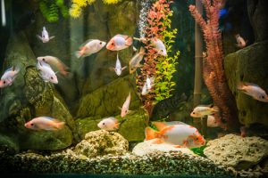 Carbon Good for Fish Aquariums San Diego, CA